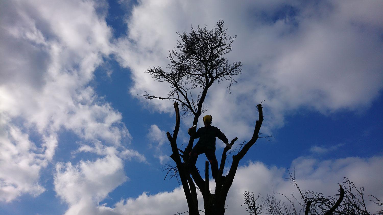 vyskove prace - Spiľovanie rizikových stromov, arboristika