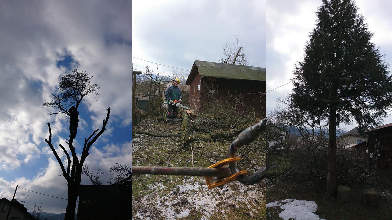 arboristika | výškové práce