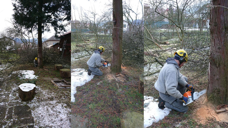 rez stromu zo zeme pomocou napnutej smerovej klady | výškové práce