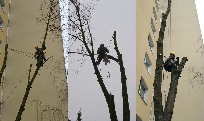 spilovanie stromov | výškové práce